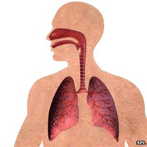 _69657641_lung_respiratory_system-spl